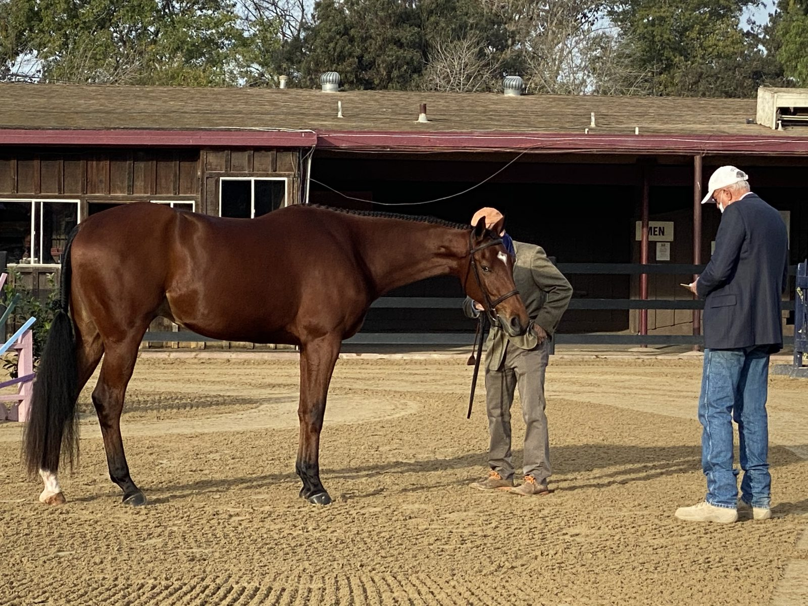 Royal Endeavor. Champion, Best Young Horse and winner the Three Year Old Hunter Breeding at Autumn Jubilee.